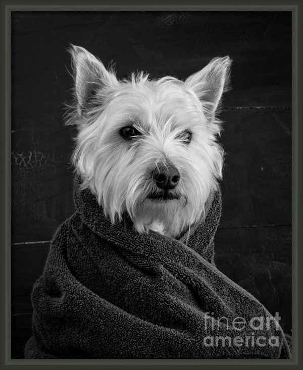 Framed Portrait of Westie