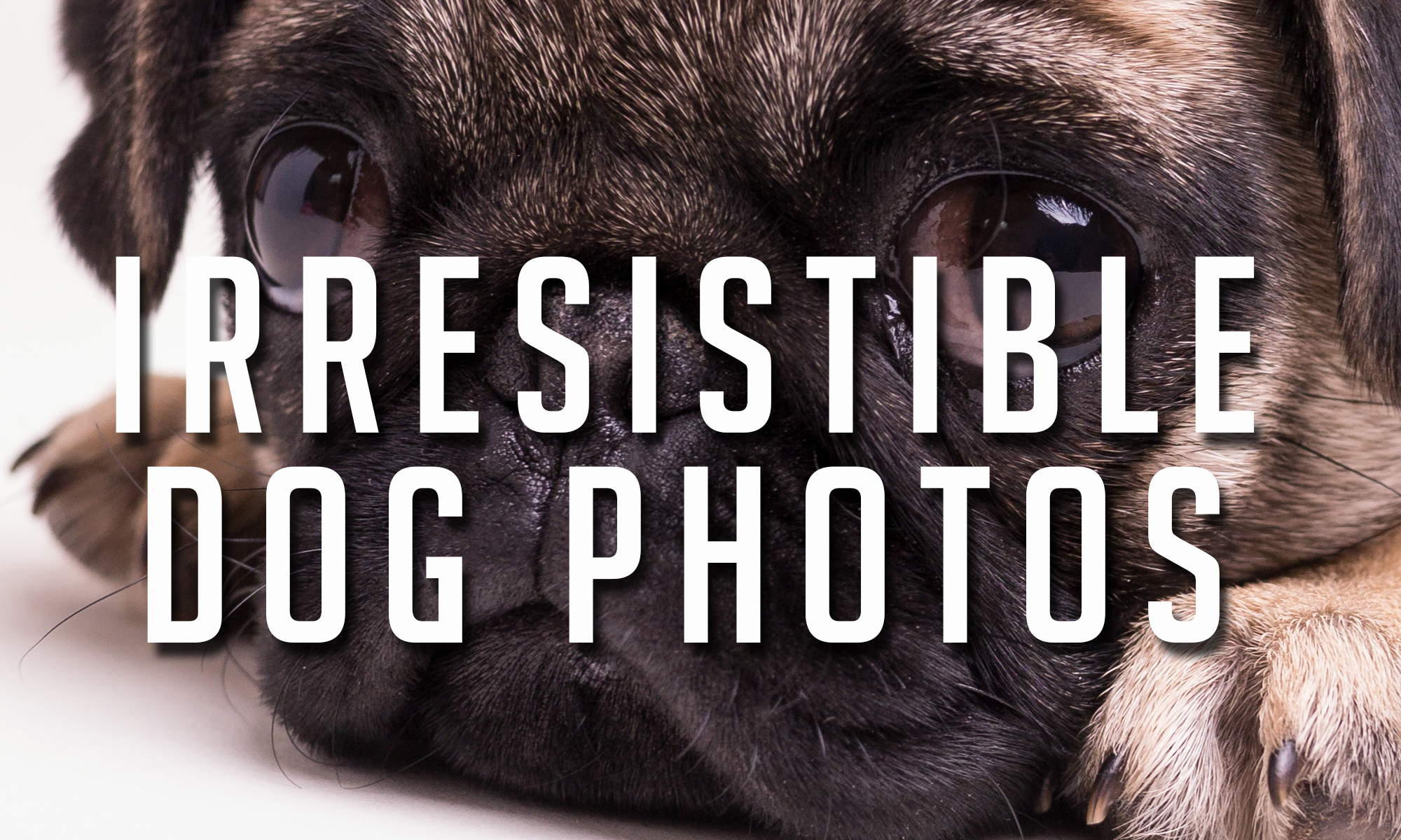 Irresistible Dog Photos