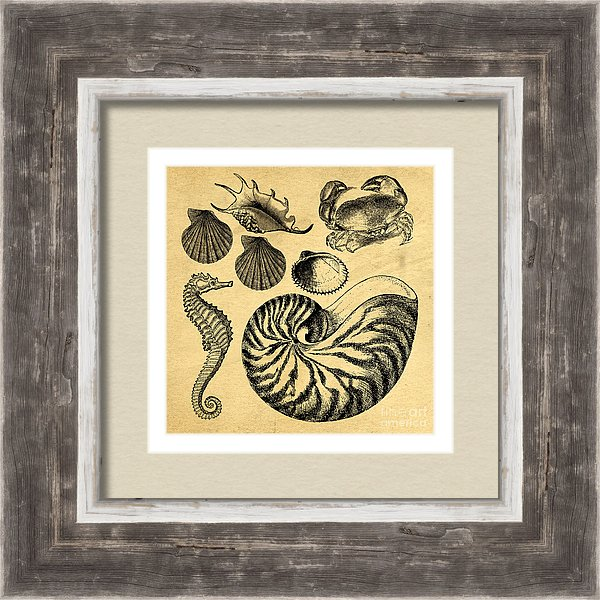 Custom frame vintage sea life decor
