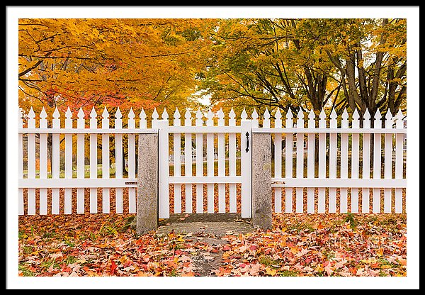 Old New England White Picket Fence in Autumn