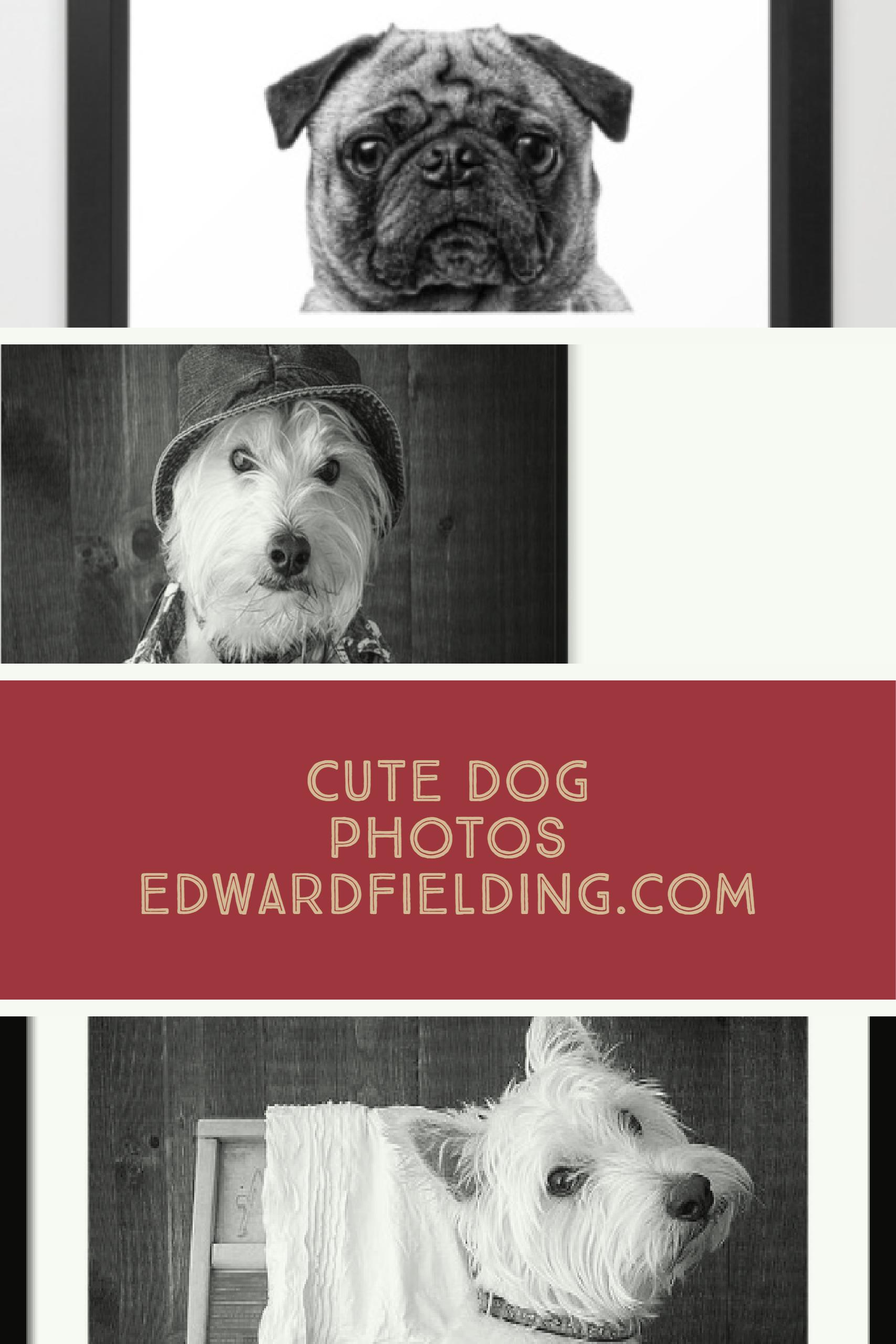 Cute Dog Photos by Edward M. Fielding