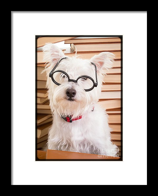 Tiki the Westie as Smart Doggie