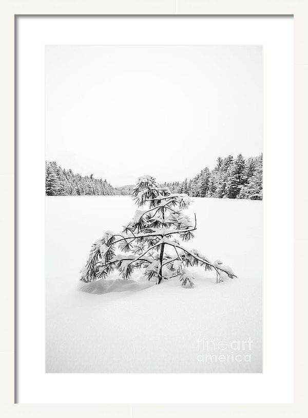 Lone Pine Tree Anderson Pond Eastman New Hampshire Framed Print by Edward Fielding