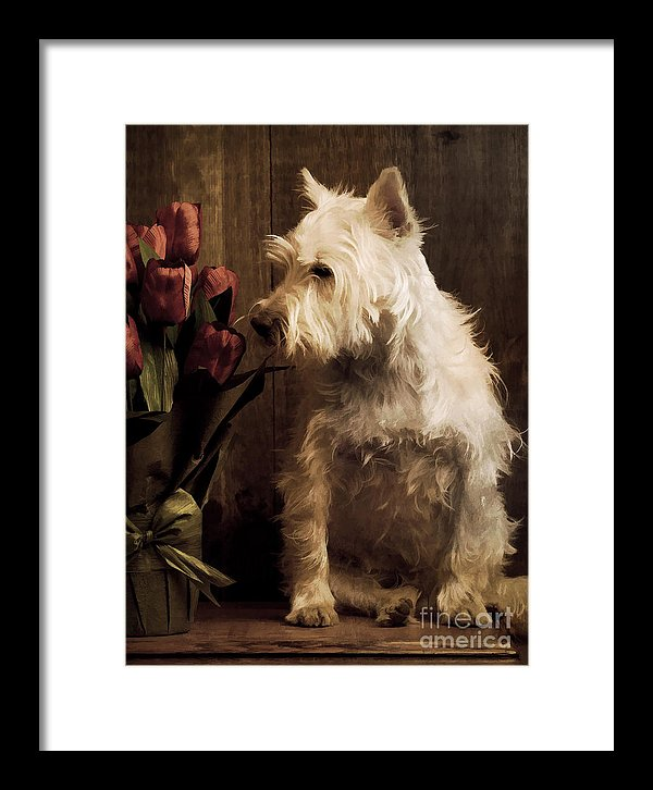 Man's Best Friend Ode To The Dog – Dogford Studios